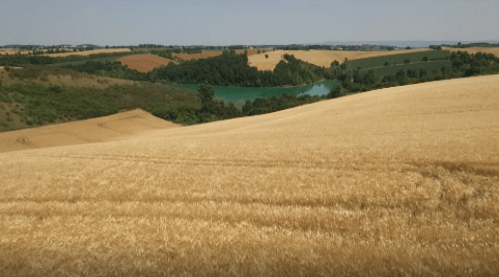 vue sur le lac et champs de blé