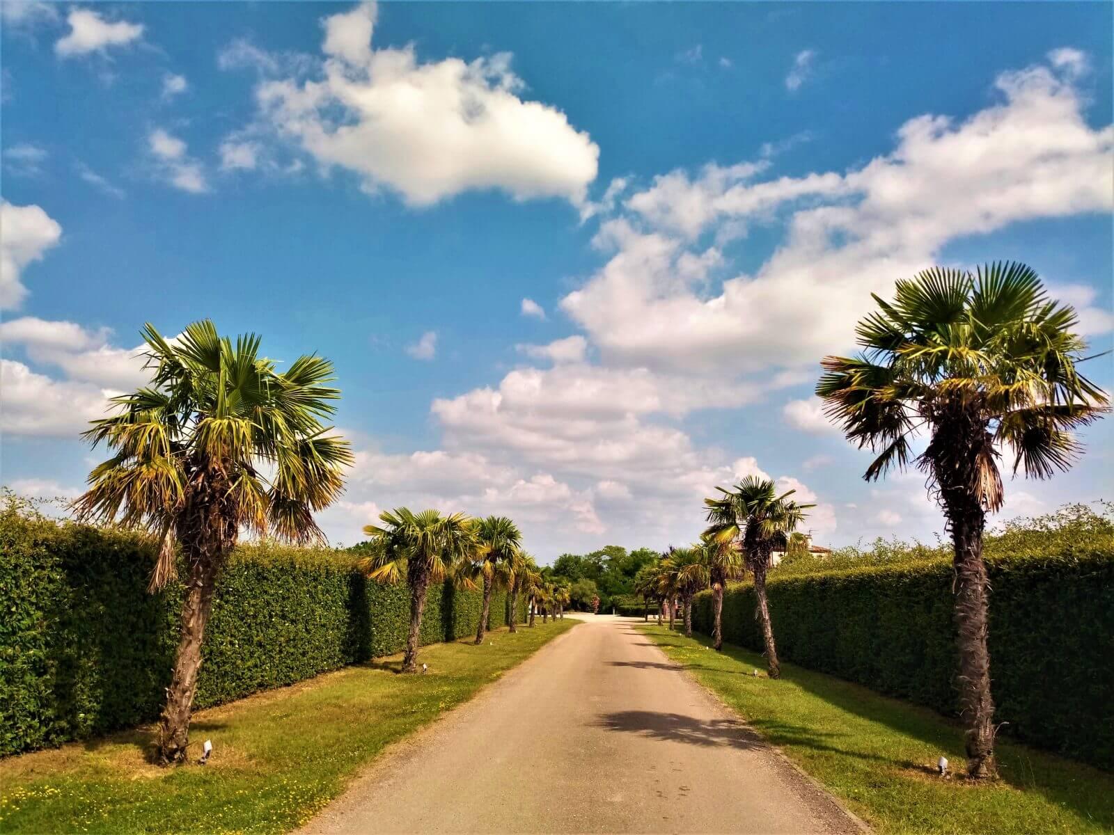 la haie des palmiers